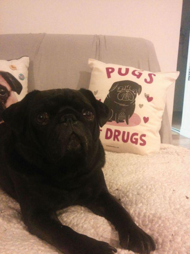 Pug-Pillow-Model-768x1024