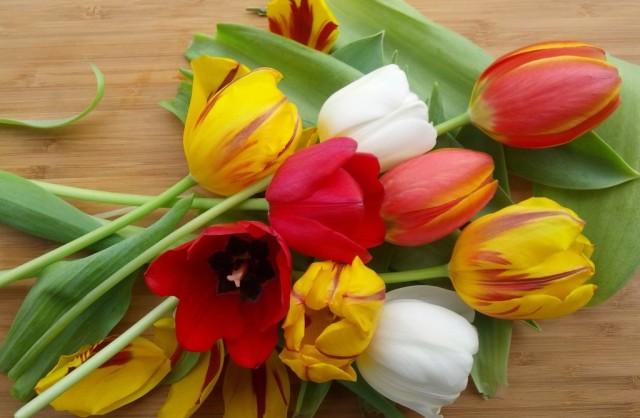 tulipsdrive-e1398370122299-1024x669